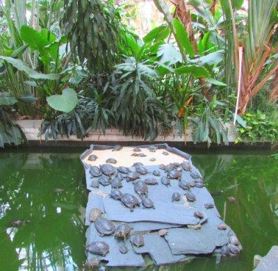 Madrid Atocha jardín tropical 1